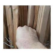 Staketenzaun 150 cm hoch mit einem Lattabstand von 8-10 cm.
