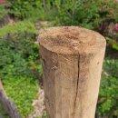 Zaunpfahl Kastanie Höhe 180 cm rund, z.B. Torpfahl, Durchmesser 10-12cm mit Spitze