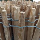Proline Staketenzaun aus Northern White Cedar 40 cm hoch, 11m-Rolle, Lattabstand ca. 4-6 cm