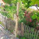 Zaunpfahl Kastanie Höhe 150 cm rund zu Zaun Höhe 100 cm Durchmesser ca 8-10cm mit Spitze